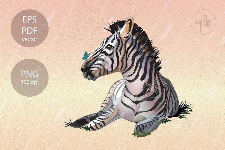 Zebra vector illustration, wild animal clip art