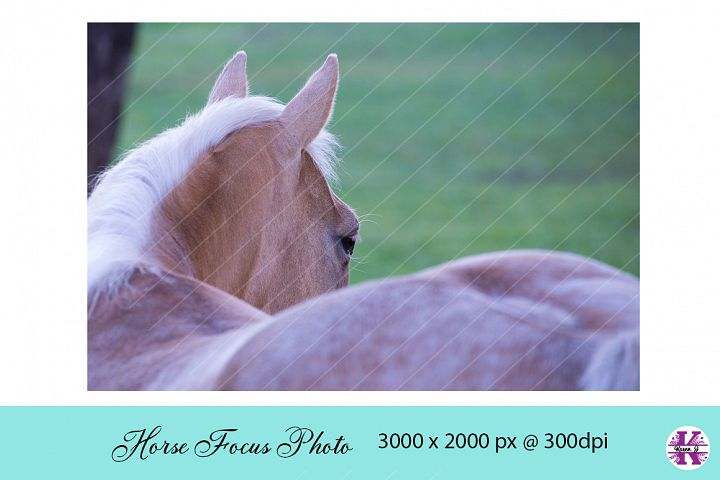 Horses Focus Photo JPG