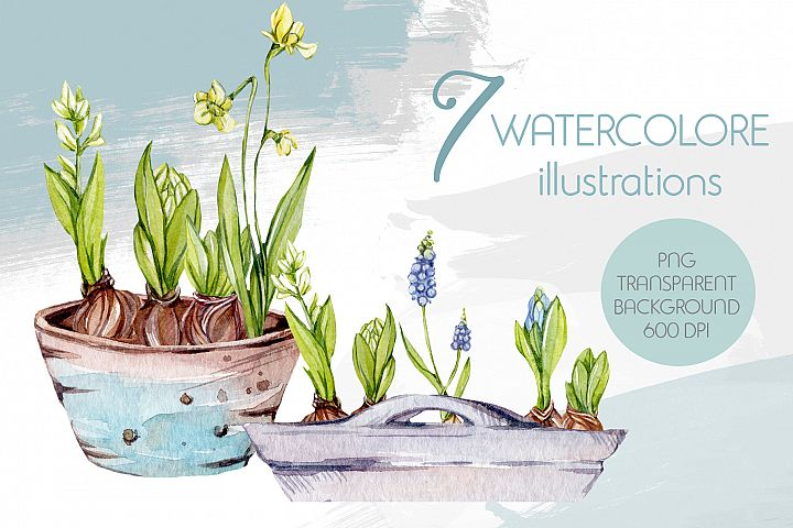 7 Watercolor illustrations