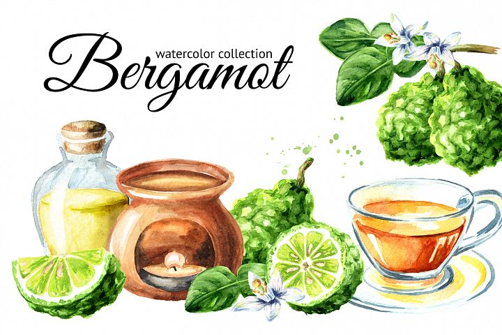 Bergamot. Watercolor collection