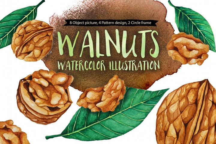 Walnuts Watercolors Illustration