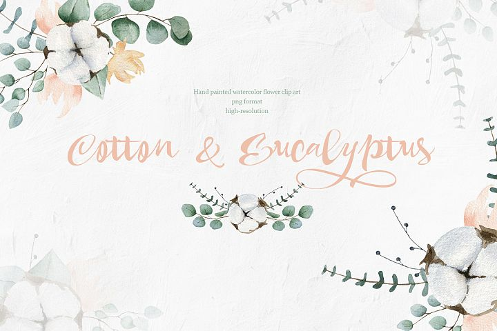 Cotton and Eucalyptus watercolor spring clipart