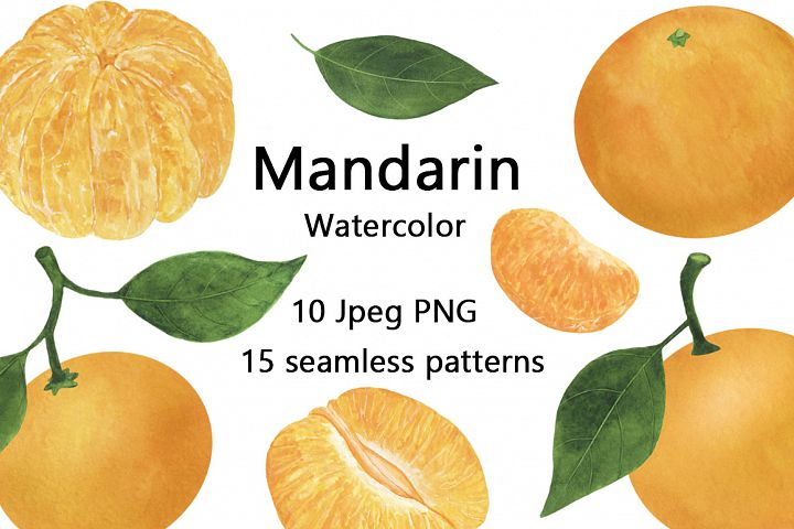 Set of mandarin watercolor food illustration