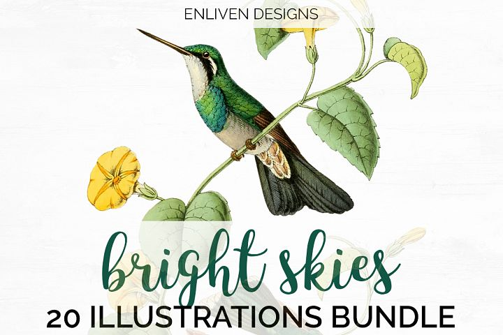 Hummingbird Bundle - Volume One - 20 Count