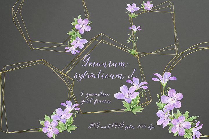 Geranium sylvaticum l. 5 geometric gold frames. Set