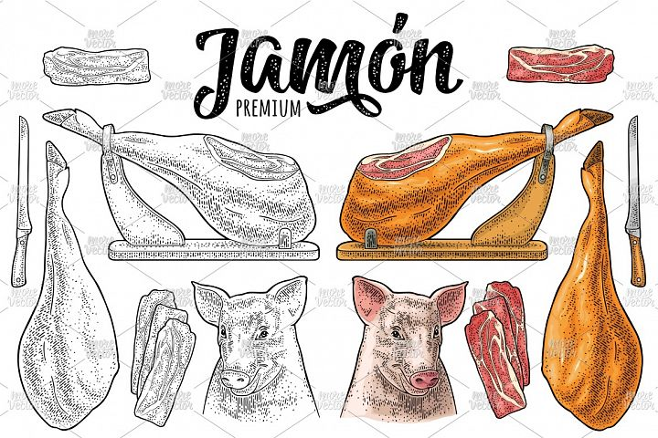 Pig head, knife, ham slice, leg. Vector color engraving