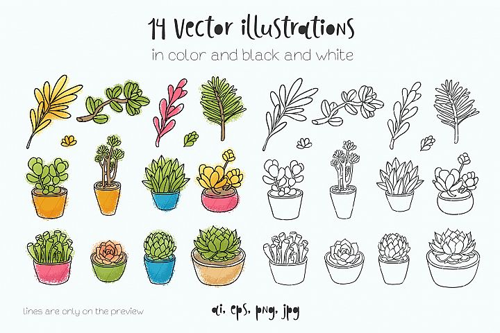 Succulents 14 vector illustrations example 2