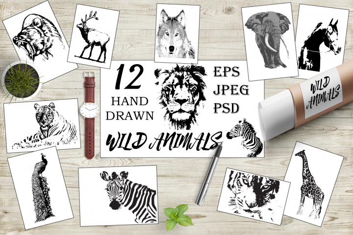 Hand-drawn wild animals