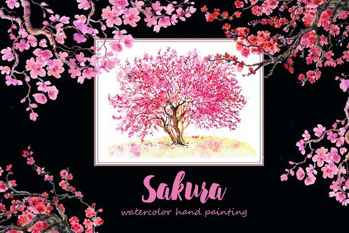 Sakura flowers, clipart,watercolor