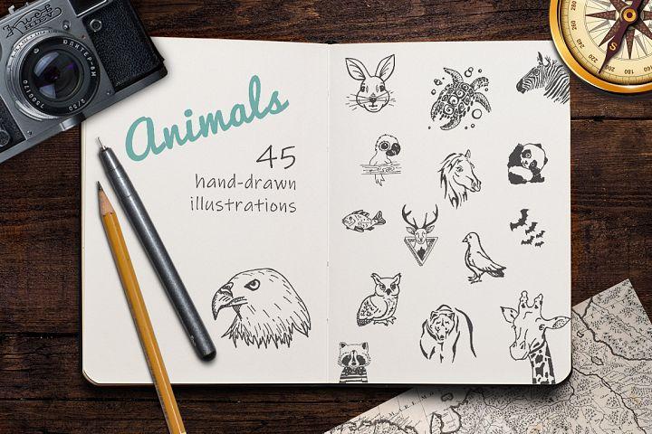 Hand Drawn Illustrations -Animals-