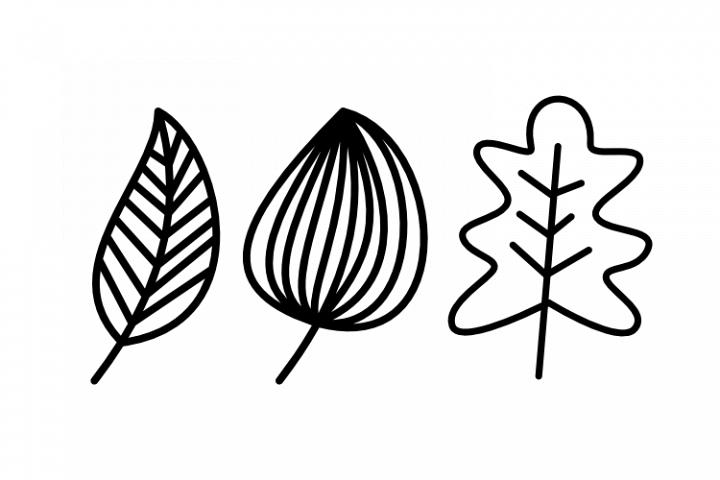 Leaf Image Vector