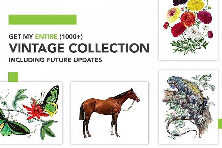 Entire Vintage Collection -Over 1000 Illustrations