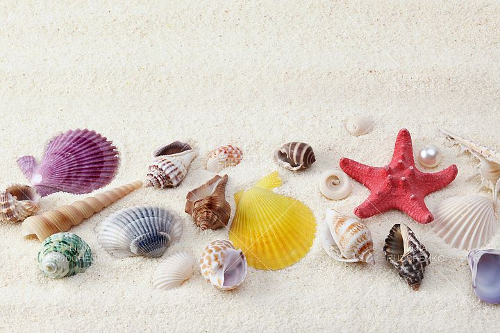 collection of seashell on sand