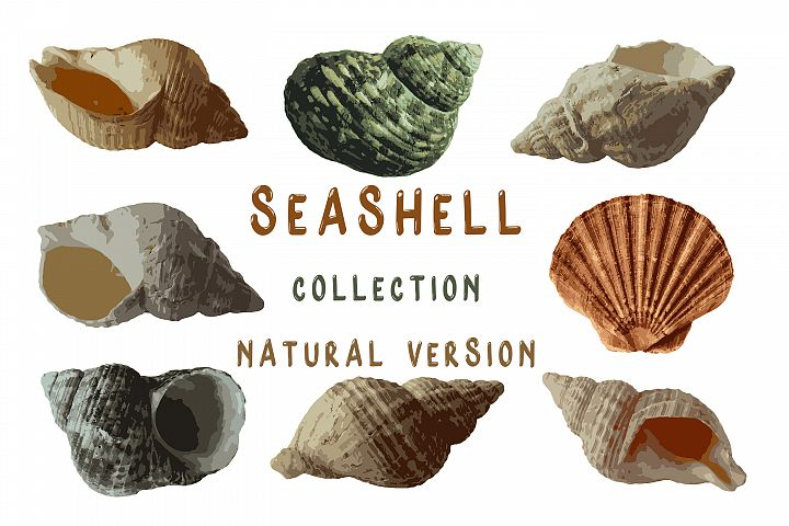 Seashell Collection - Natural Version
