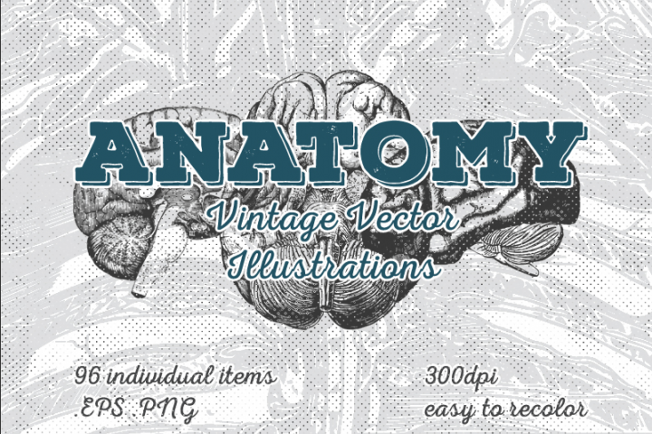 Vintage Anatomy Vector Illustrations 96 Items