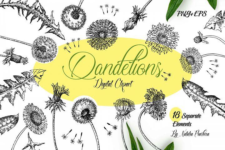 Dandelions Sketches Clipart