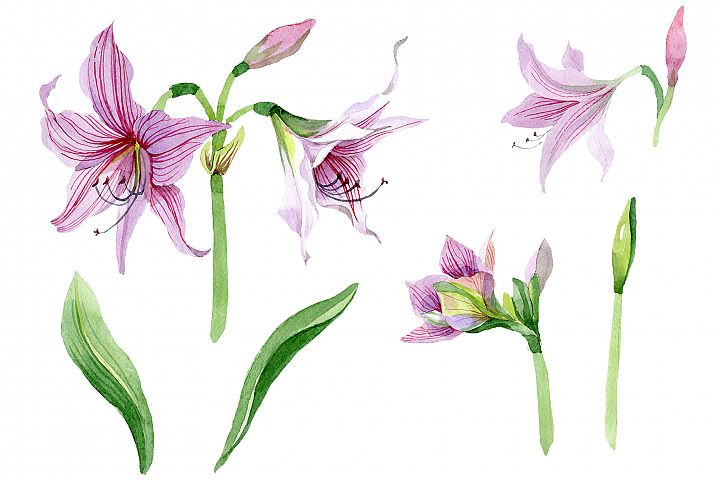 Purple amaryllis PNG watercolor flower set