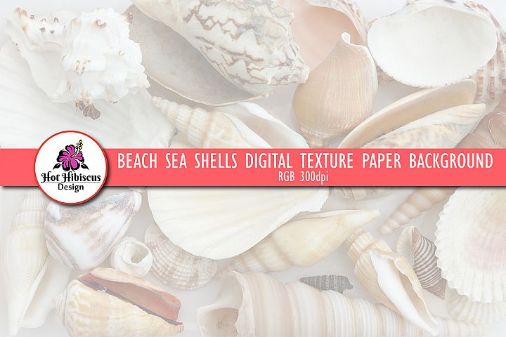 Beach Sea Shells Texture Background Digital Paper