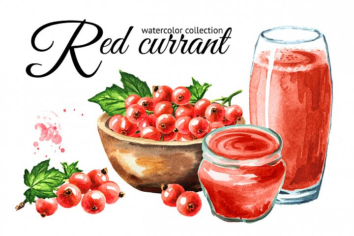 Red currant. Watercolor collection