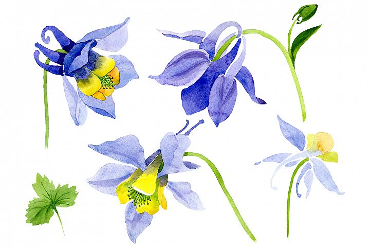 Aquilegia violet watercolor png