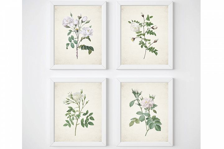 White Rose Print, Set of 4 Wall Art, Living Room Print Set