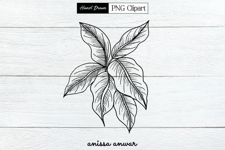 Leaves Line Art Png Clipart Sublimation Printables
