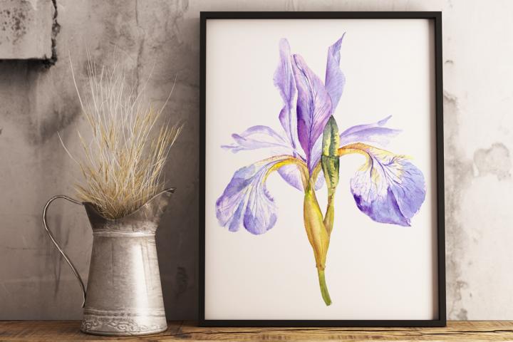 Watercolor Purple Iris Clip Art & Print