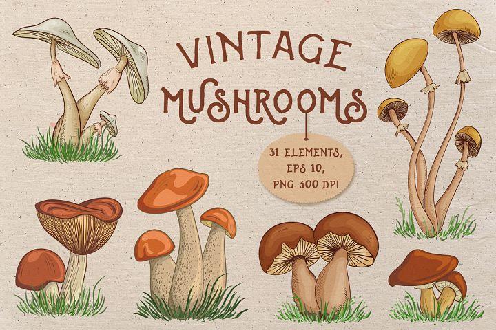 Vintage mushrooms set