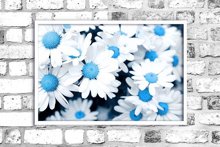 Nature photo, flower print, chrysanthemums flowers, floral