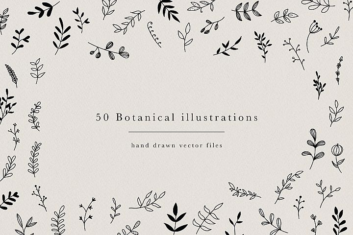 Botanical Hand Drawn Illustrations Leaves Floral Clipart