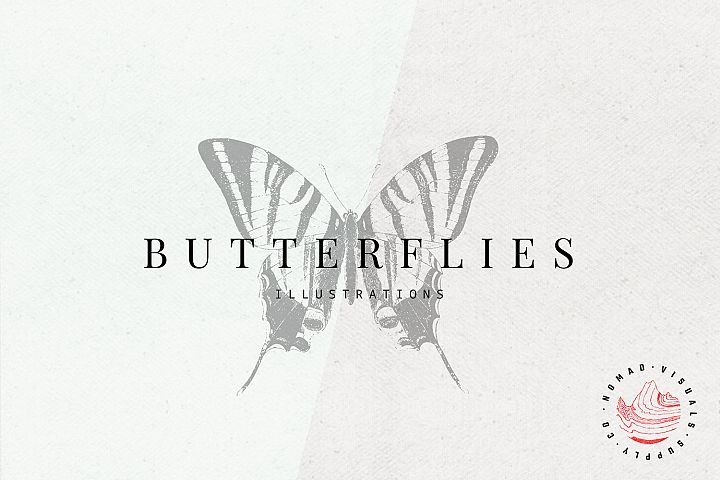 Premium Butterflies Illustrations