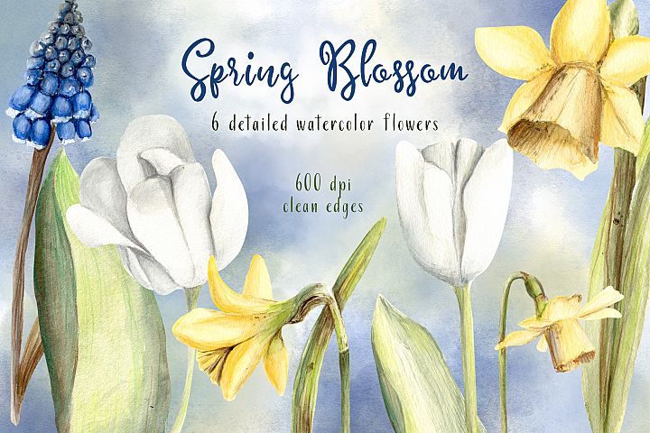 Spring Blossom Watercolor Flowers Hand Painted Tulips Daffodils and Hyacinth