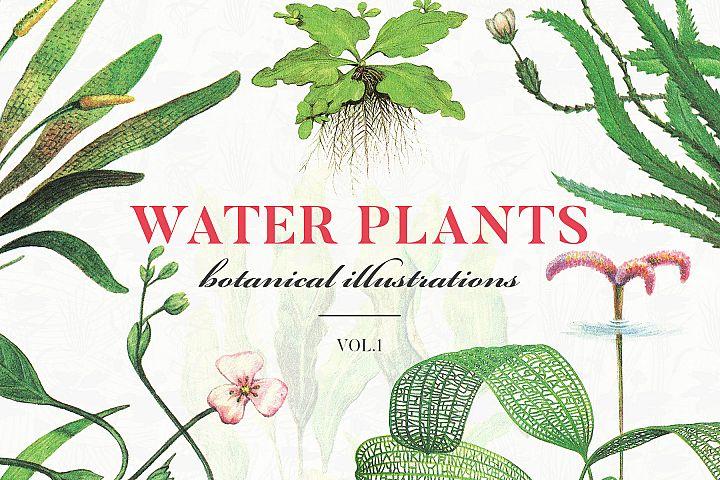 Water Plantss Botanical Illustrations Vol.1