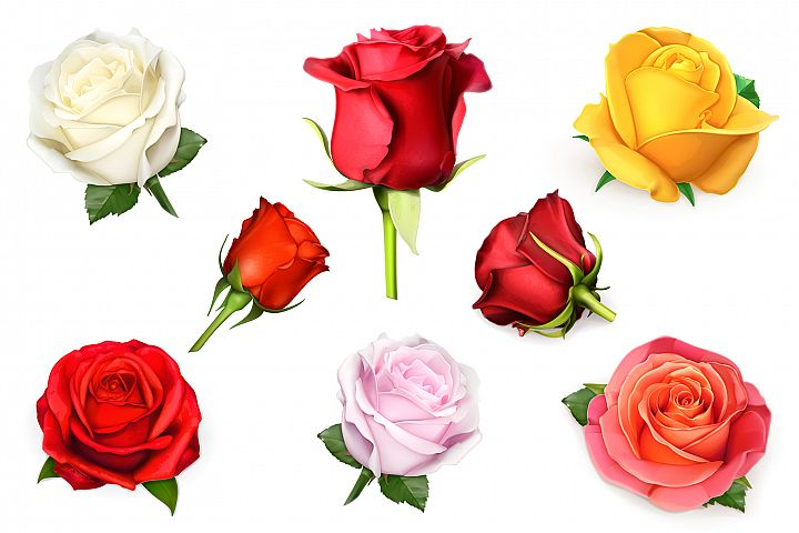 Rose, symbol of love, romantic Valentines Day, vectors set