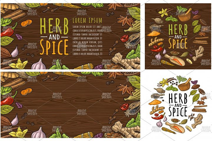 HERB and SPICE Vector color vintage engraving