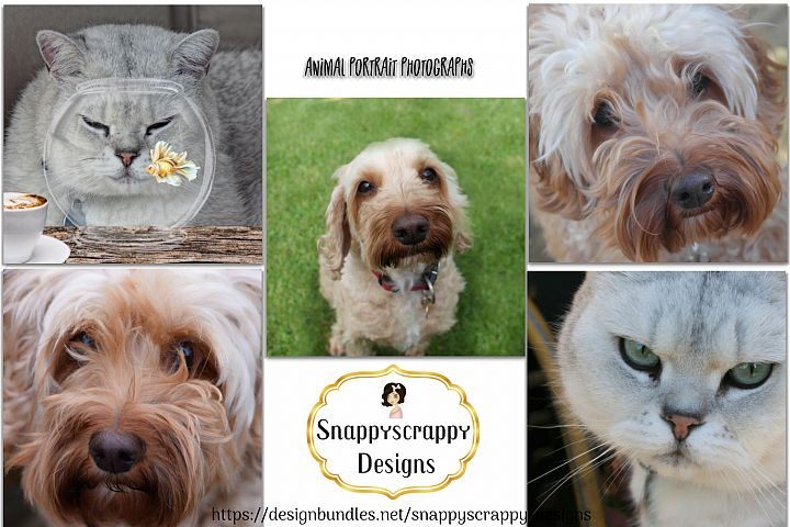 Animal Portrait Photographs