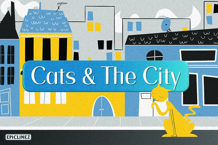 Cats and the City