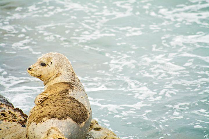 Seal photo 4