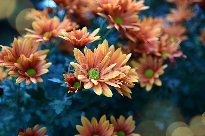 Nature photo, flower photo, floral photo, autumn photo