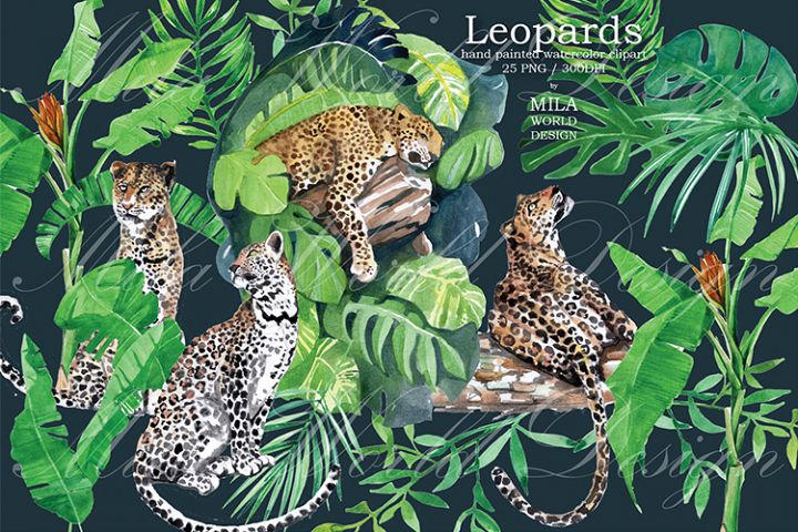 Leopards Watercolor Clip Art, Hand painted Jungle clipart