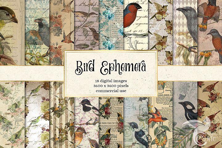 Bird Ephemera Digital Paper