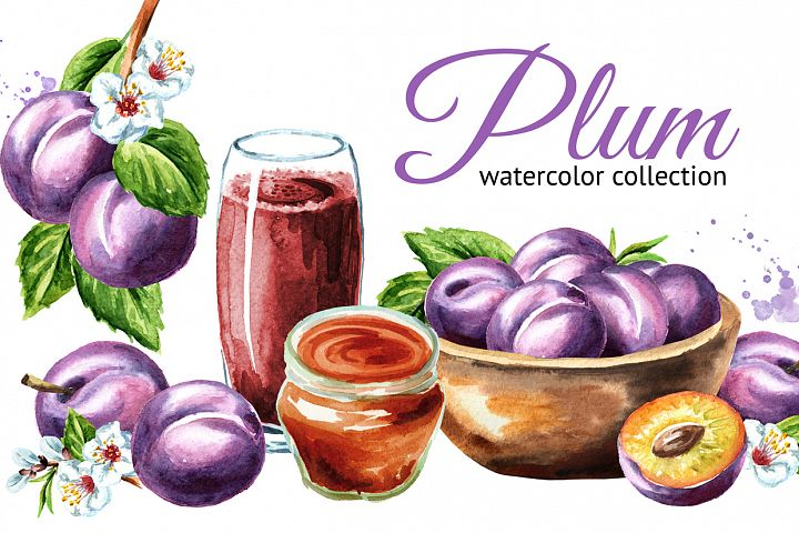 Plum. Watercolor collection