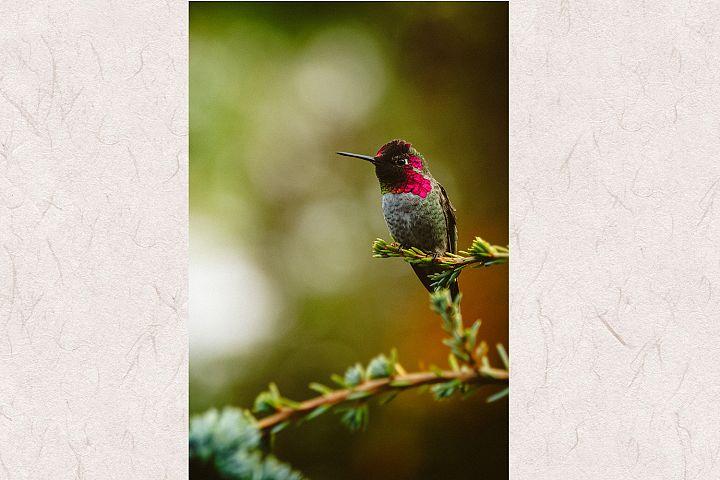 Hummingbird photo 1