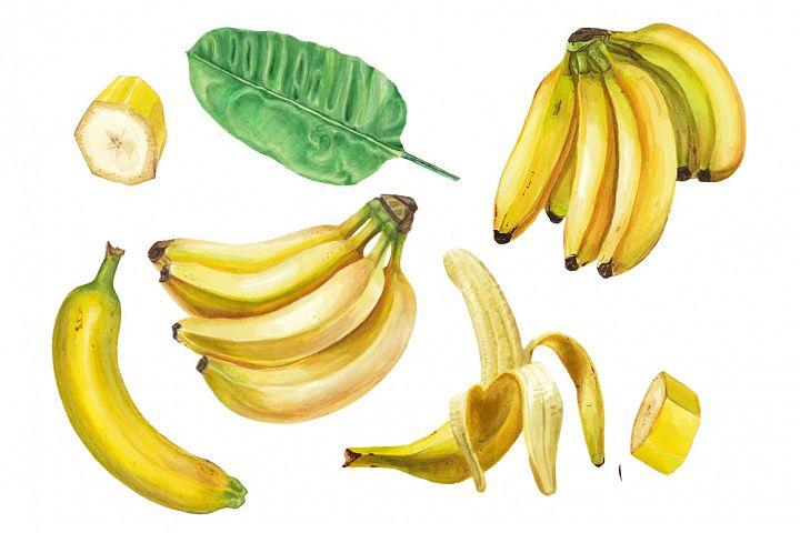 Watercolor banana collection