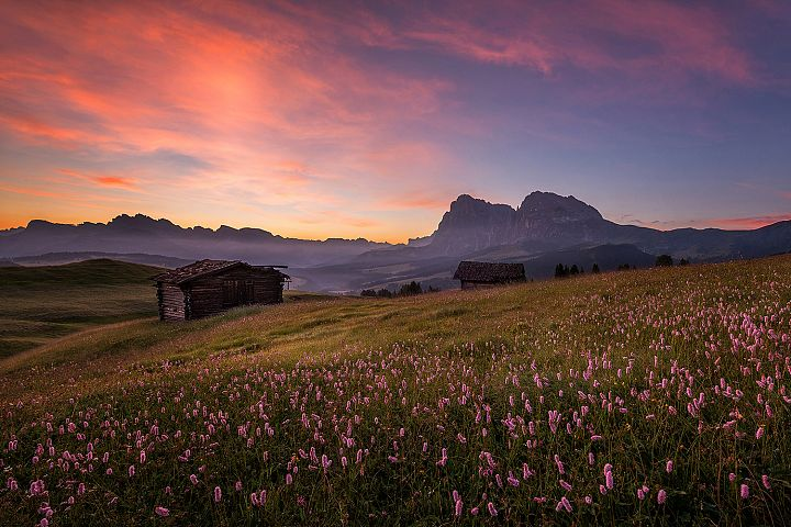 Beautiful flowers at Alpe di Siusi at sunset