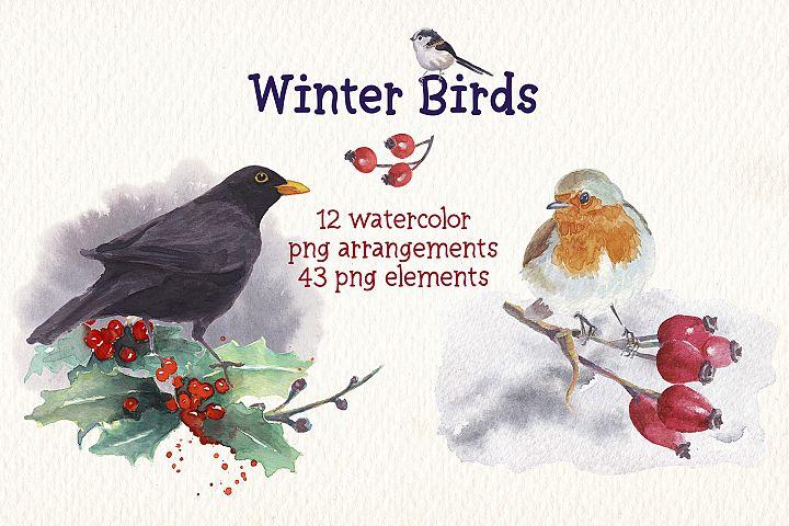 Winter birds watercolor clip art set design elements