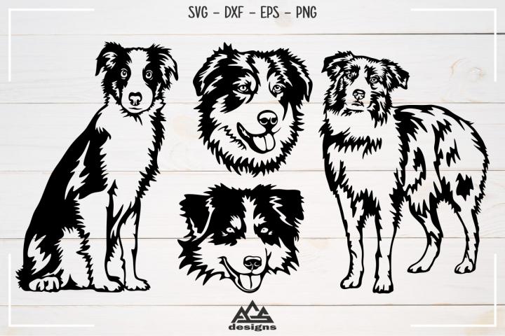 Dog Australian Shepherd Svg Design