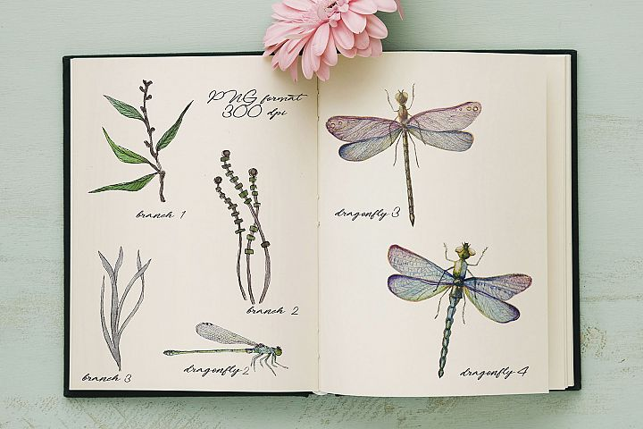 Watercolor dragonflies example 6
