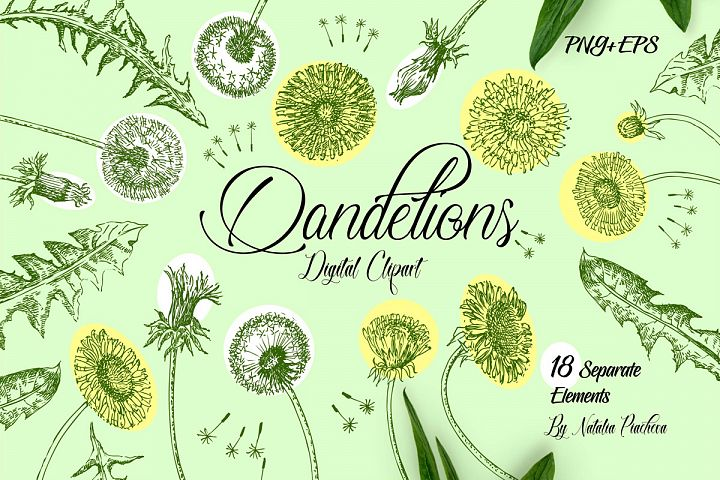 Dandelions Digital Clipart
