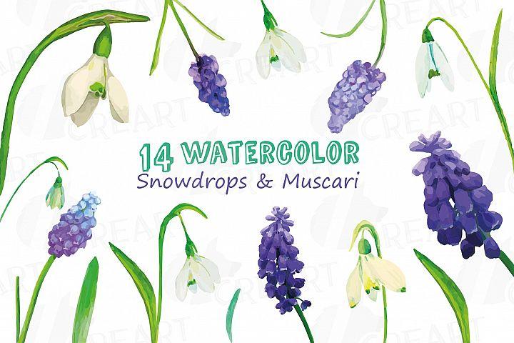 Snowdrops and Muscari watercolor clip art pack, decoration